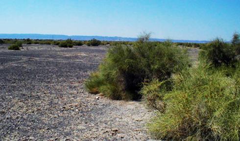 灰棕漠土景观
